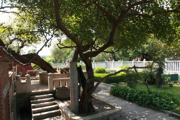 buddha tree