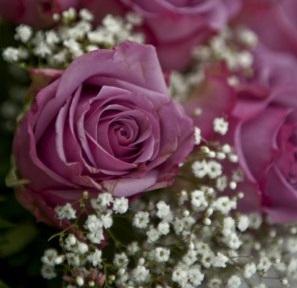 Rosa del Diwali