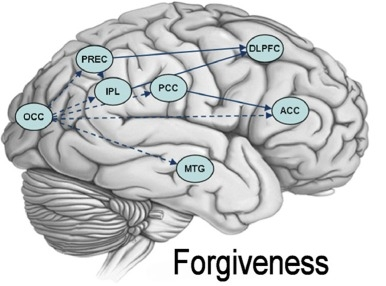 Granger-Causality-maps-for-forgiveness-The-picture-depicts-brain.png