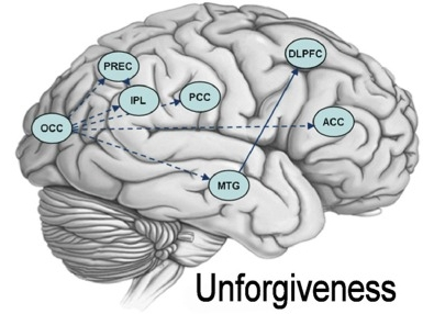 Granger-Causality-maps-for-unforgiveness-The-picture-depicts-brain.png